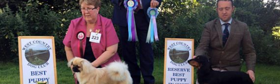 Louie wins his first Best Puppy in Show